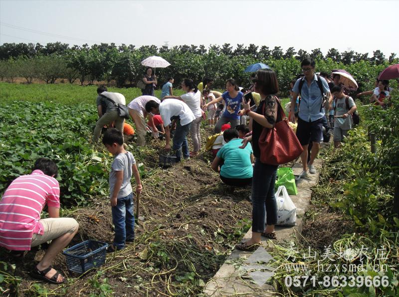 图1:杭州秀山美地农场 挖番薯