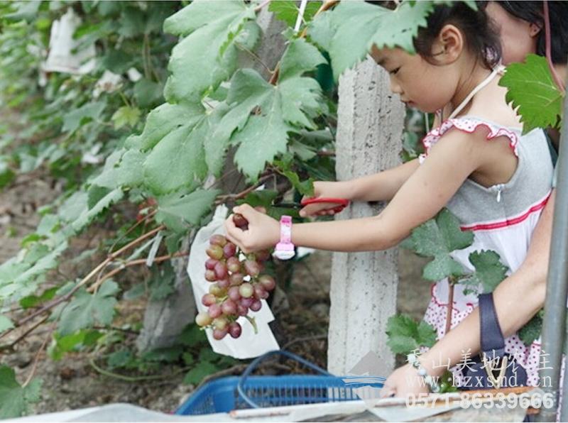 图1:杭州秀山美地休闲农庄 亲子采摘