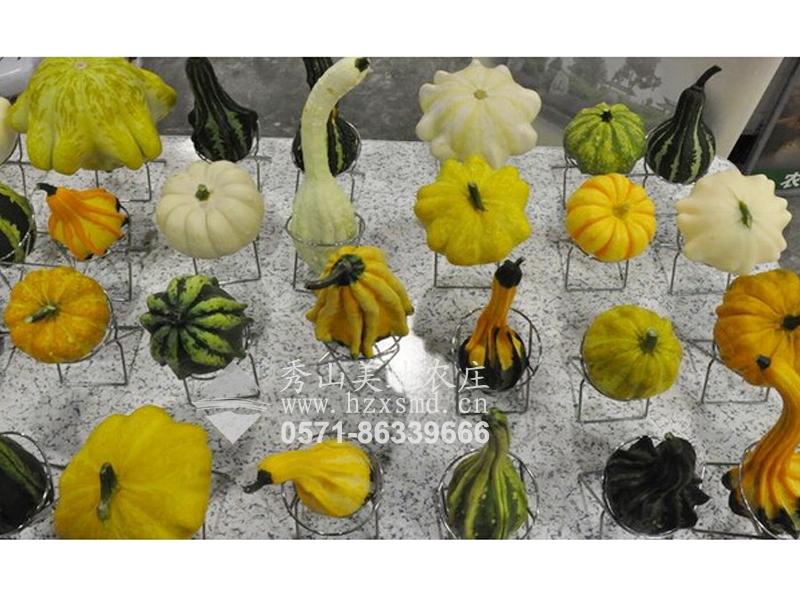 图1:杭州秀山美地农庄 南瓜系列