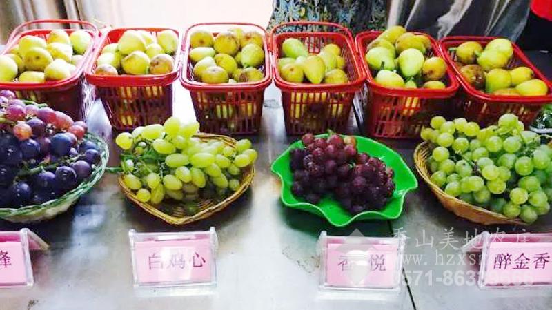 图2:杭州秀山美地一宝――无花果